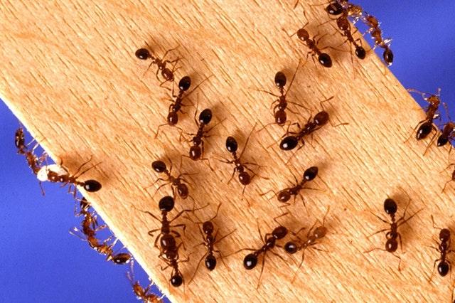 Pest And Termite Control Service